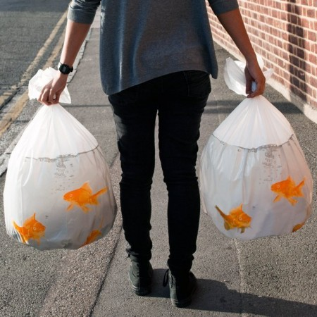 Goldfish Trash Bags $15.95